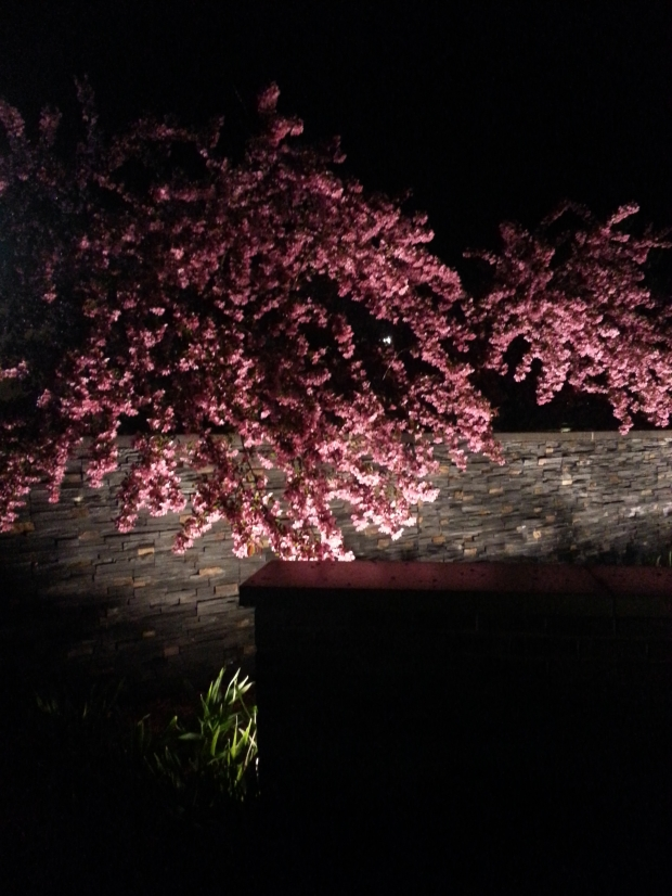 Blossoms and Stone Wall