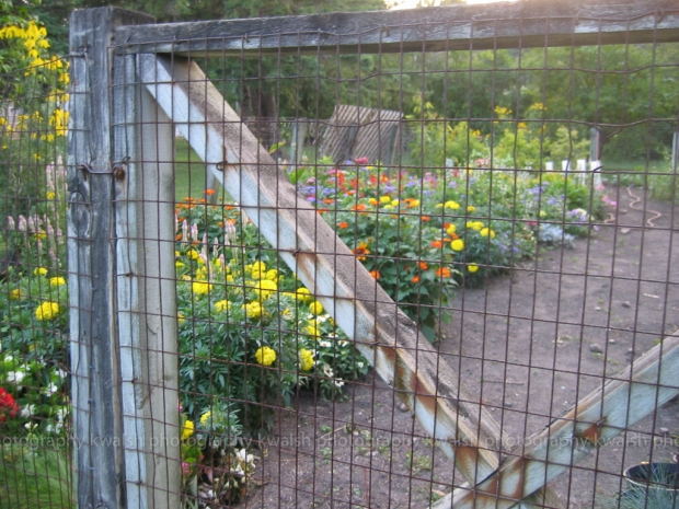 Garden Gate ©kwalsh photography 2012