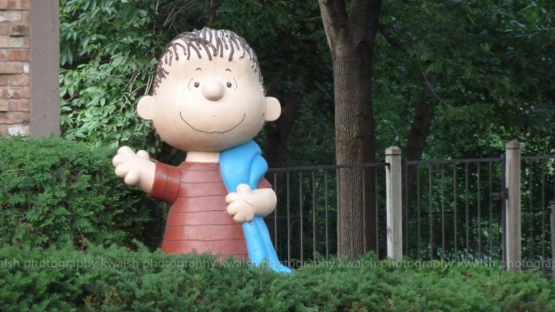 Linus Van Pelt in the Garden ®kwalshphotography 2015