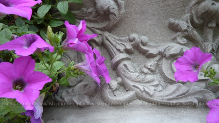 Urn and Petunias ©kwalsh photography 2015