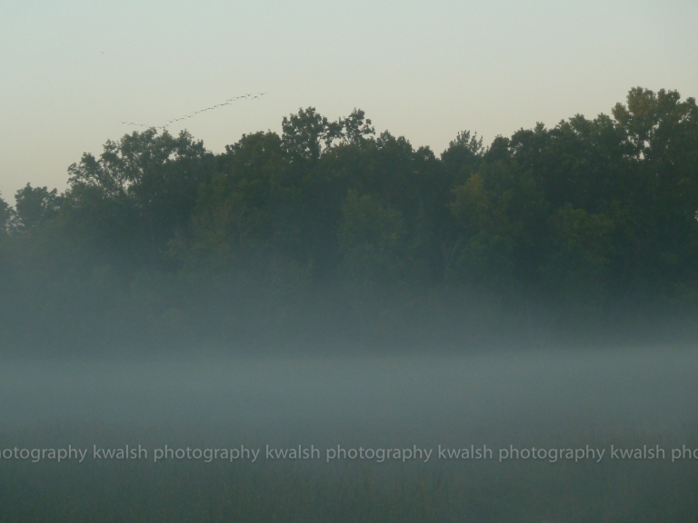 Morning Fog with Birds  ©kwalsh photography 2011