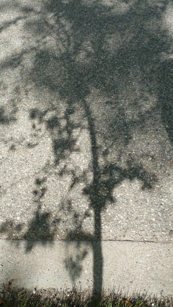 Sidewalk Shadow ©kwalshphotography 2015