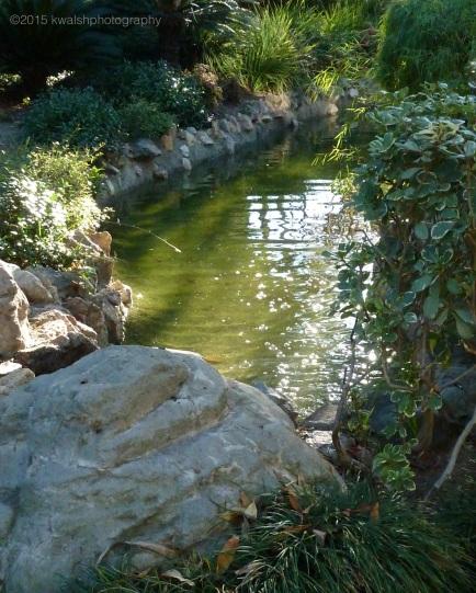 Sunlight on Garden Pond