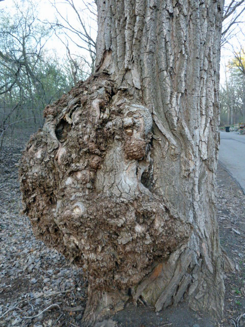 Tree Growth ©2014 kwalshphotography