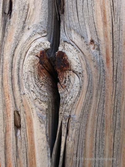 Wood Study ©2016 kwalshphotograhy.com